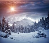 Awesome winter landscape with spruces covered in snow. Frosty day, exotic wintry scene. Magic Carpat poster