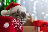 Christmas Cat Sleeping. Portrait Of Kitty Wearing Santa Clause Hat Over The Christmas Tree, Gifts, L poster