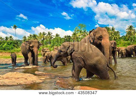 Постер, плакат: Слон группы в реке, холст на подрамнике