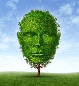 stock photo of psychology  - Personal development and personality growth as a medical symbol of psychology as a tree in the shape of a front facing human head as intelligence and social thinking for mental behavior health - JPG