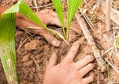 stock photo of afforestation  - Hands Planting A Tree in afforest concept - JPG