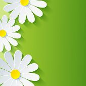 image of 3d  - Spring abstract floral background with 3d flower chamomile - JPG