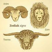 picture of taurus  - Sketch zodiac signs lion aries and taurus - JPG