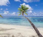 pic of samoa  - Tropical Samoa with white sandy beaches and coconut palms - JPG