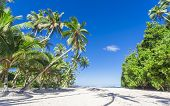 picture of samoa  - Tropical Samoa with white sandy beaches and coconut palms - JPG
