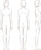 picture of body fat  - Vector illustration of women - JPG