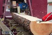 picture of sawing  - Sawing boards from logs with circular sawmill - JPG