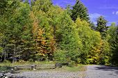 picture of log fence  - A view of the forest with Autumn colored trees and a log fence - JPG
