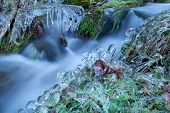 picture of icicle  - icicle on grass by winter mountain river Germany - JPG