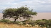 picture of ethiopia  - Langano Lake in the South of Ethiopia - JPG