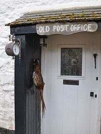 image of barometer  - An old English Post Office now a rural cottage complete with hanging pheasant in the porchand a wall mounted barometer - JPG