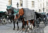 picture of carriage horse  - view of horse carriages in Vienna - JPG