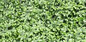 foto of fern  - Fern is a plant out of the damp woods - JPG