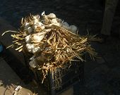 Garlic On Market