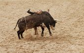pic of brahma-bull  - the bull riding event at a rodeo in Arizona - JPG