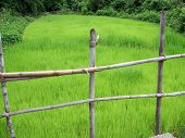 Wooden Fence And Small Rice Field poster