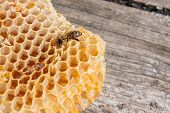 Close Up View Of The Working Bee On The Honeycomb With Sweet Honey. poster