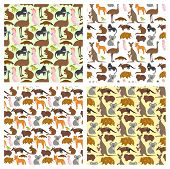 Australia Wild Animals Cartoon Popular Nature Characters Flat Style And Australian Mammal Aussie Nat poster