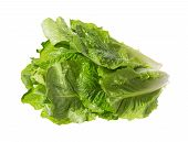 Leaves Of Romaine Salad In Petty Bunch. High Resolution Photo. poster