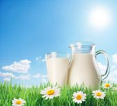 stock photo of milk products  - Milk jug and glass on the grass with chamomiles - JPG
