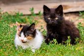 Two Little Furry Kitten Playing In Yard. Kitten On Green Grass, Healthy Lifestyle poster
