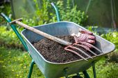 image of humus  - Pitch fork and gardening gloves in wheelbarrow full of humus soil - JPG