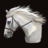 Colorful White Horse Portrait With Bridle. Horse Head With Long Mane In Profile Isolated On Black Ba poster