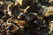 Coral Reef Close Up, Coral Reef Macro Photography, Underwater Coral Reef Texture, Ocean Nature Close poster