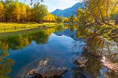 Siberia, Altai Republic, Yellow And Green Trees Are Reflected In The Quiet River, Birches Bend Over  poster