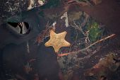 A Starfish In A Rock Pool Surrounded By Various Seaweed And Coastal Plantlife poster