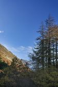 Epic Autumn Fall Landscape Of Backlit Larch Trees In Valleys Of Sleet Fell And Howstead Brow In Lake poster