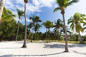 Morning View Palm Grove. Tall Palm Trees Grow On The Clear White Sand By The Sea. Beautiful Exotic L poster