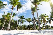 Palm Grove On The Ocean Beach. Undersized Lush Palm Trees Grow In Dense Rows. Sand At The Base Of Th poster