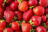 Background Of Fresh Strawberries. Ripe Strawberries. Ripe Berries Close-up. Various Fresh Summer Ber poster