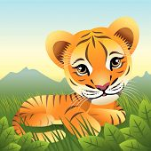Baby Animal Collection: Tiger poster