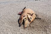 stock photo of bottlenose dolphin  - The victim Bottlenose dolphin lies on the coast - JPG