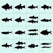 picture of freshwater fish  - Set of freshwater fish on green background - JPG