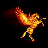 picture of winged-horse  - Fire Pegasus rearing up - JPG