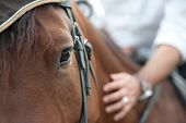 stock photo of chestnut horse  - closeup of a horse head with detail on the eye and on rider hand - JPG