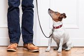 stock photo of begging dog  - dog looking up to owner waiting to go walkies - JPG