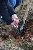 stock photo of afforestation  - Pic of Planting new tree - JPG