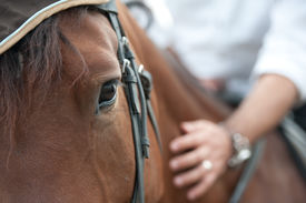image of horse-riders  - closeup of a horse head with detail on the eye and on rider hand - JPG