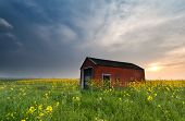 stock photo of farmhouse  - sunset behind farmhouse on rapeseed flowers field - JPG