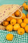 stock photo of loquat  - A small basket full of freshly harvested loquats - JPG