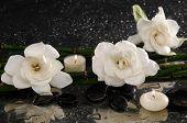 stock photo of gardenia  - Three gardenia flower and two candle on pebbles  - JPG