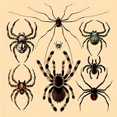 stock photo of black widow spider  - Spiders - JPG