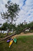 stock photo of kayak  - Sea kayaks summer ready at shore behind pine trees Scandinavia Denmark Havnsoe  - JPG