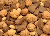 image of brazil nut  - Selection of mixed nuts in their shells including Brazil nuts - JPG