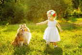 foto of sheltie  - Little girl and dog breed sheltie playing outdoors on a sunny day - JPG