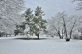 image of blanket snow  - First fluffy snow covered trees grass and bushes in the white blanket in the Park - JPG